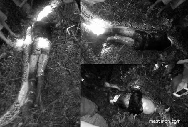 Kumpulan foto Manusia ditelan Ular Piton | Sulawesi 26 Maret 2017