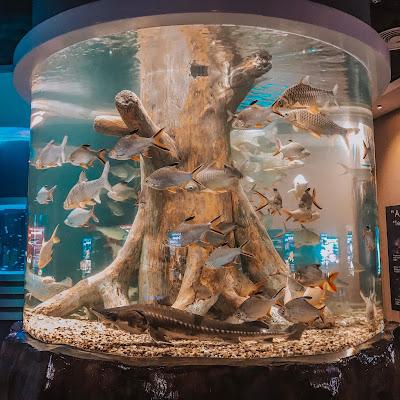 Big aquarium in The Shore Ocenarium Melaka
