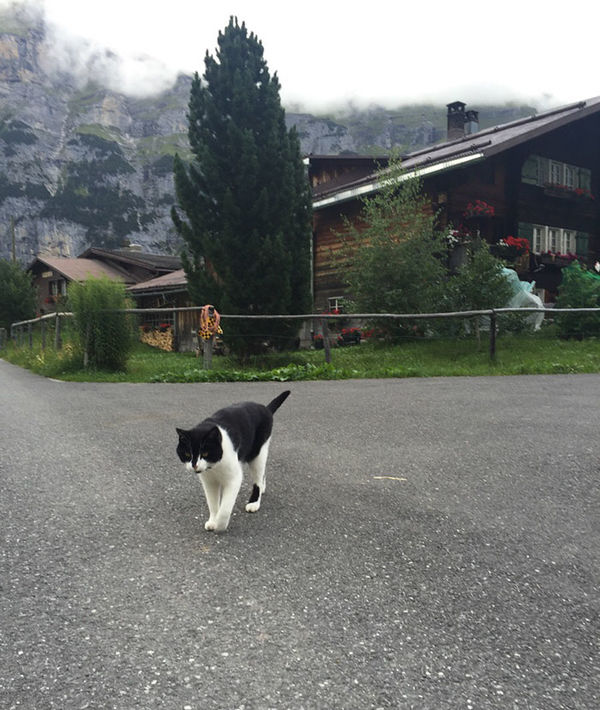 gimmelwald cat