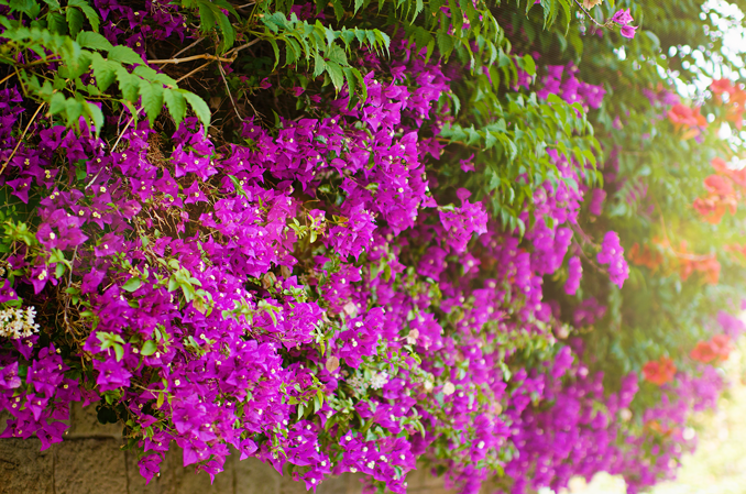 Flores barcelona