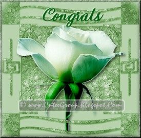 Green Rose extra including Congrats