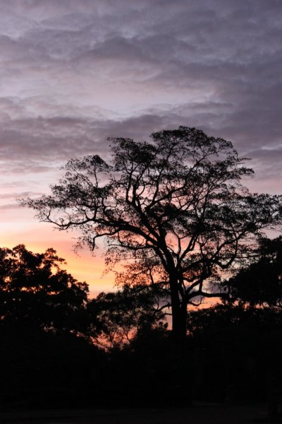 Evidence for persistent forest reliance by indigenous peoples in historical Sri Lanka