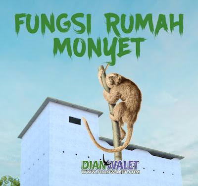 Fungsi dan Kegunaan Rumah Monyet pada Gedung Walet