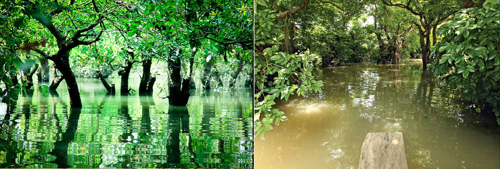 Discover Bangladesh: Ratargul swamp forest – only freshwater swamp ...