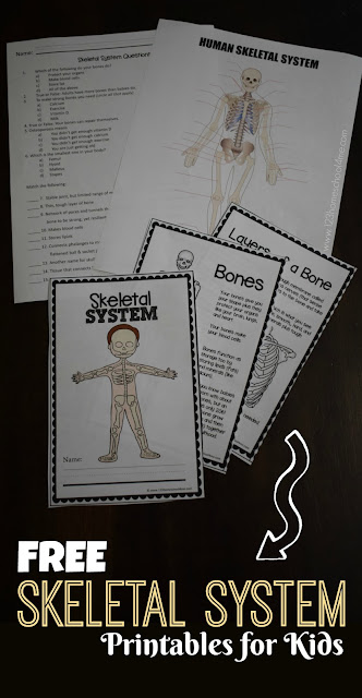 FREE SKeletal System for Kids Worksheets perfect for learning bones for kids and about human body activities for kids, homeschool, first grade, 2nd grade, 3rd grade, 4th grade, 5th grade, 6th grade, science