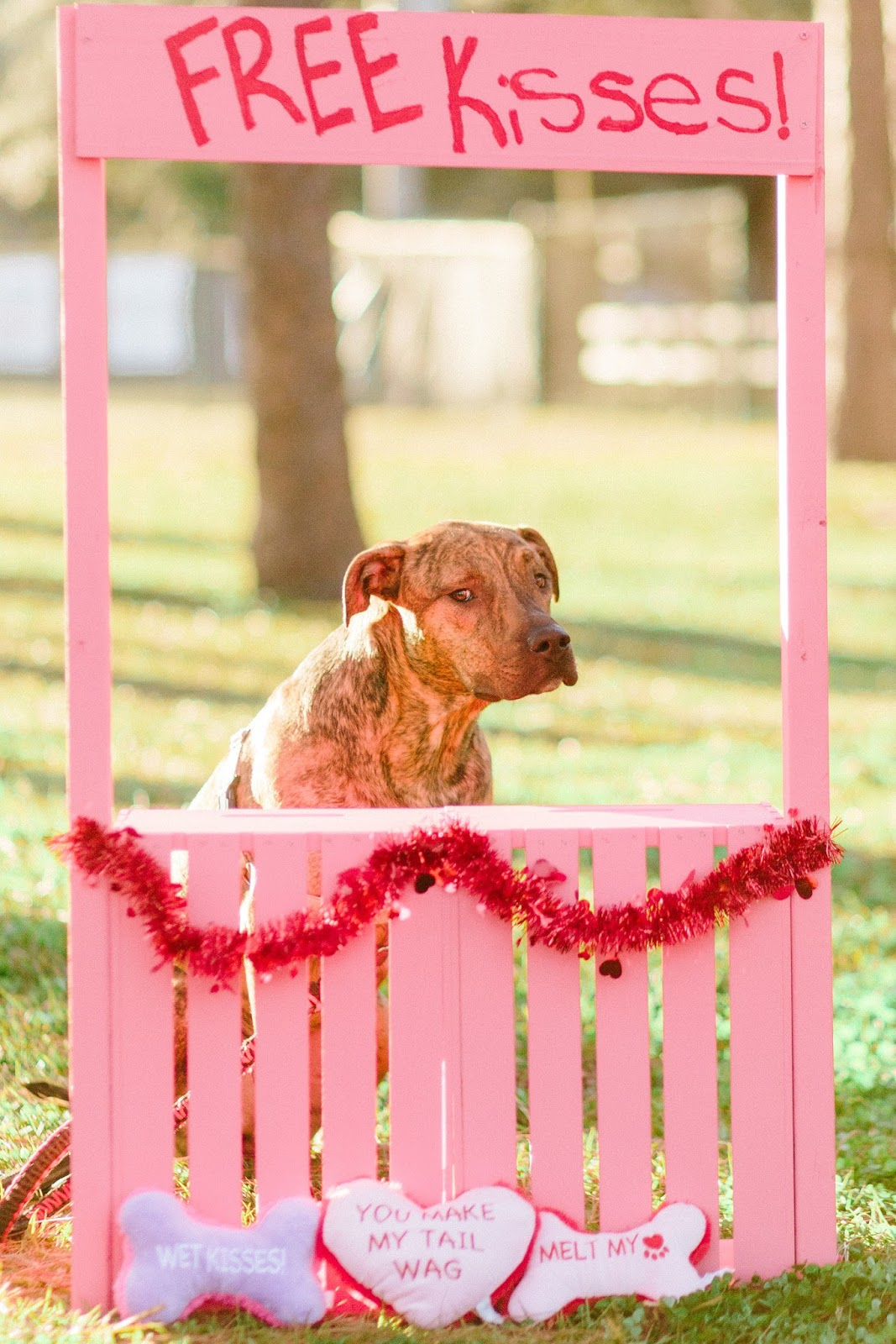 Brindle dog in Valentine's day kissing booth