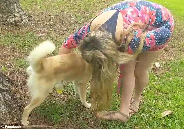 علاج البشرة ببول الكلاب