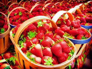 Wisata Kebun Strawberry