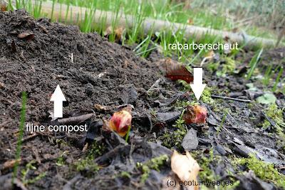 Rabarber bemesten met compost of organische meststof in februari of maart