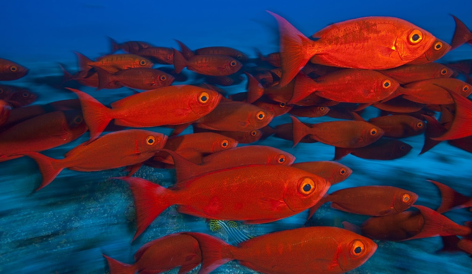 ➞ Latest Colorful Fish Images Photos Wallpapers Free Download ...