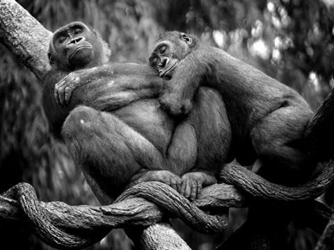 Love of Animal