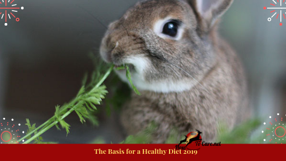 What do you see at the base? On the off chance that you picked bunny pellets, you wouldn't be distant from everyone else. Strolling down the little creature passageway in pet stores normally fortifies that bunny nourishment appears as a dark colored pellet