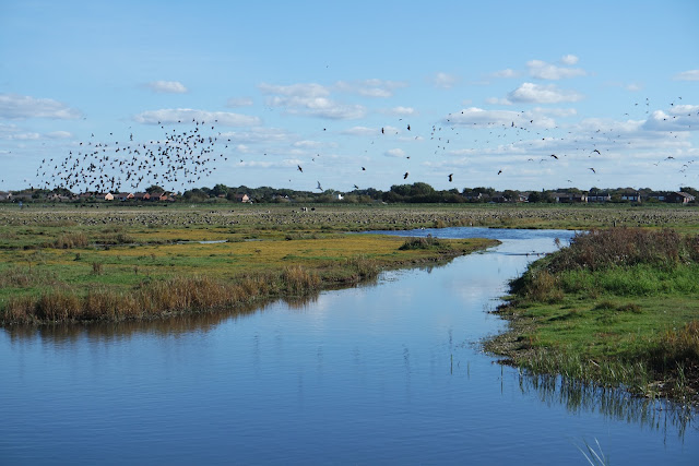 a flock of geese lifting off from a marsh beside a pond