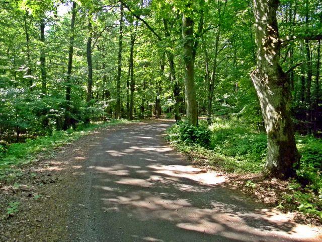 naturalny las, rezerwat przyrody
