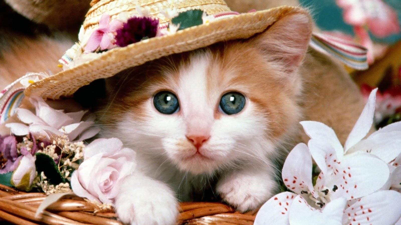 Gambar Kucing Imut Kado Ulang Tahun