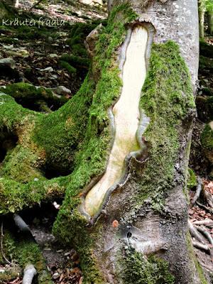 Zeichen im Baum, Spuren hinterlassen