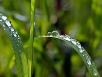 https://pixabay.com/de/pflanze-natur-leben-1331703/