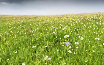 Wallpaper: Green Grass. Summer. Flowers. Plants