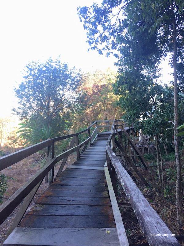 Cây cầu thơ mộng giữa Rừng Nam Cát Tiên, Đồng Nai