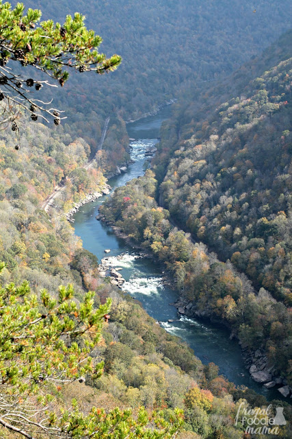 The Diamond Point Overlook of the Endless Wall Trail arguably gives you the best views of the New River and its white water rapids below.