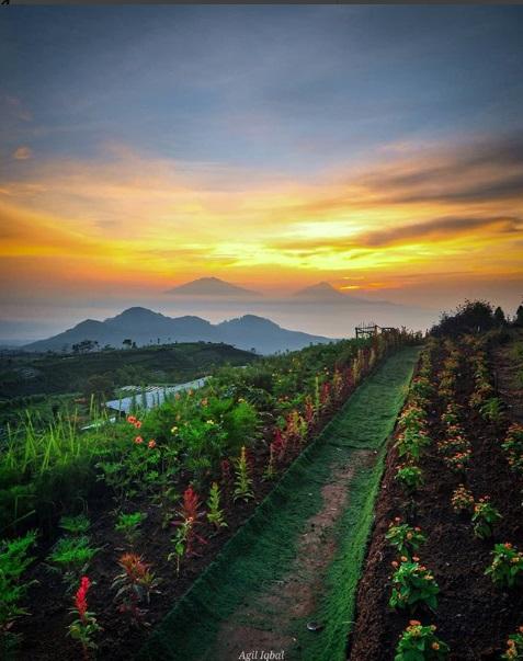Tempat Instagramable di Kaki Gunung Sumbing
