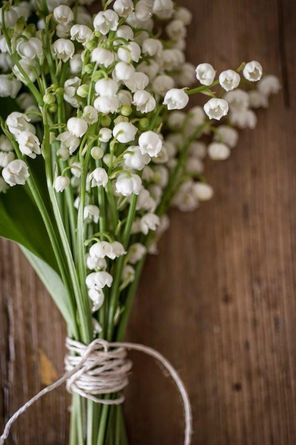 Flori albe margaritar