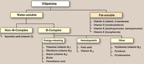 Types Of Vitamins Pdf