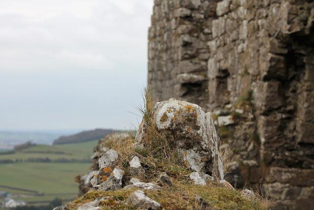 Rock Lichen Dunamase