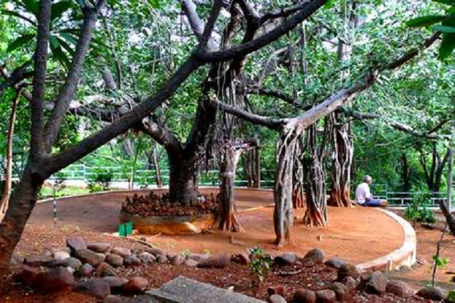 Meditation Tree in Puttaparthi, Andhra Pradesh