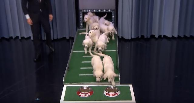 Puppies predict Super Bowl LIV winner on Tonight Show Starring Jimmy Fallon 1/30/2020