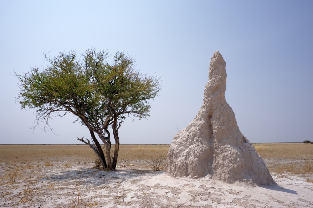 Termite Mounds of Okavango Delta
