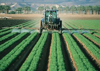 Glyphosat Herbizid Unkrautvernichtung gesundheitsschädlich