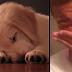 La gente se acaba de enterar de lo que sueñan los perros cuando duermen y no pueden parar de llorar