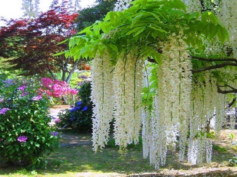 Plantas Para Pergolas Perfect Awesome Jardin Moderno Piedras