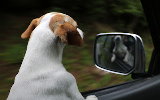 Thelma watching the road ahead