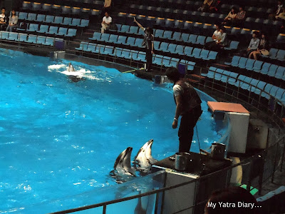 Dolphin pool at the Epson Aquarium, Prince Hotel Shinagawa - Japan
