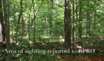 Ohio Bigfoot Hunters Summer