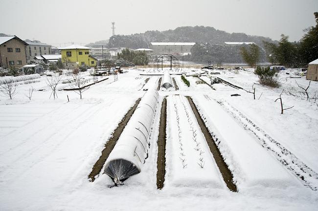 そらのバラ畝の雪景色