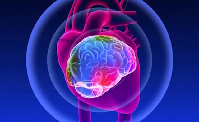 """El corazón tiene """"cerebro"""""""