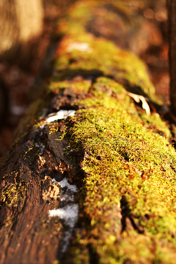 Log covered with moss
