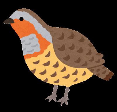 コジュケイのイラスト(鳥)