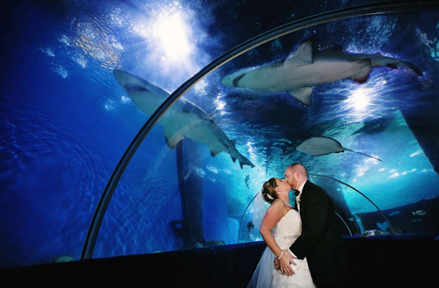 Wedding Venues In Cleveland Ohio greater cleveland aquarium
