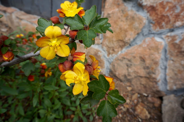 Wild Flowers; Botanic Garden; www.greysuede.com