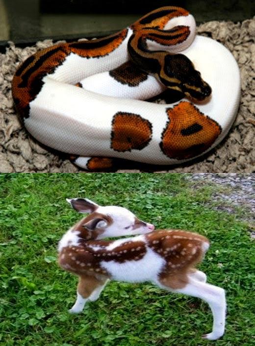 Animais com piebaldismo - Cobra e veado