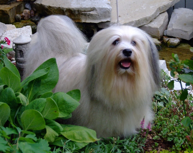 Image Result For Dog Breeds Suitable For Allergy Sufferers