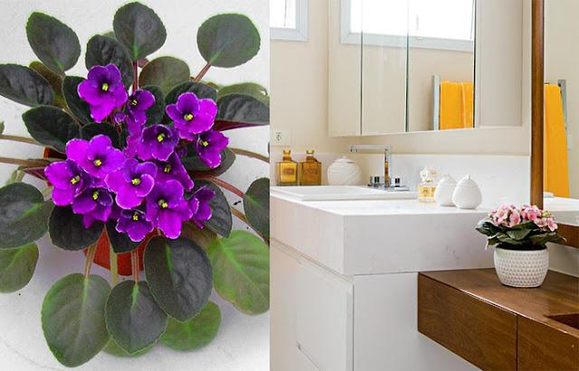violeta-no-banheiro-abrirjanela