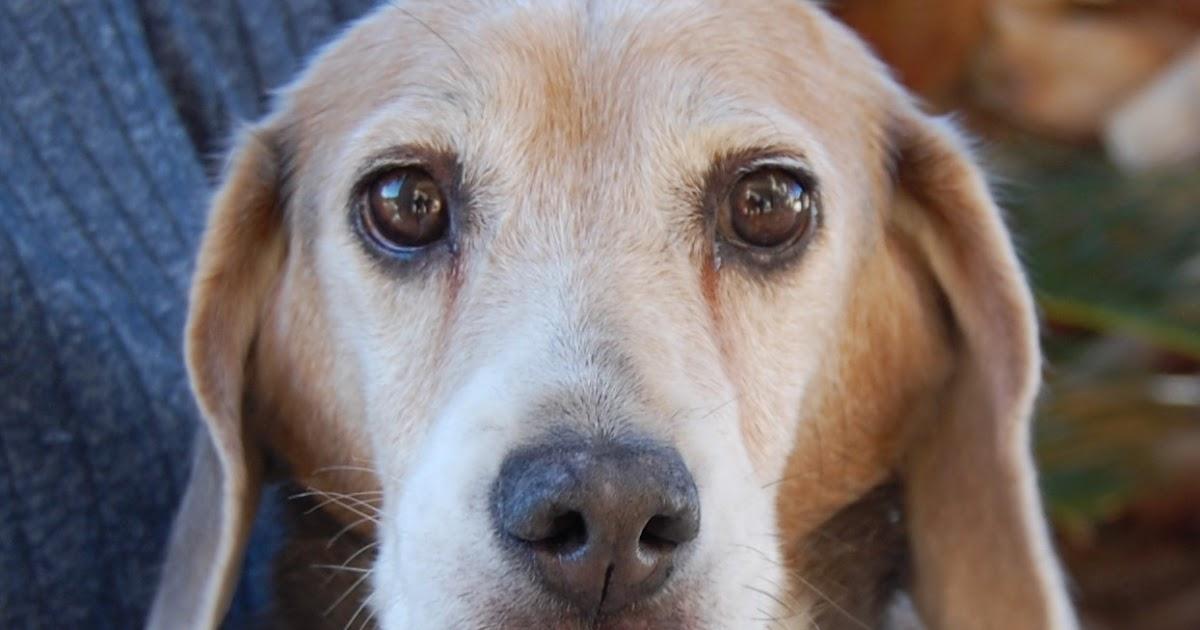 Nevada spca animal rescue walden for Dog pound las vegas nevada