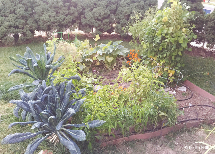 Fall Garden // Garden Update: September 2018 // www.thejoyblog.net