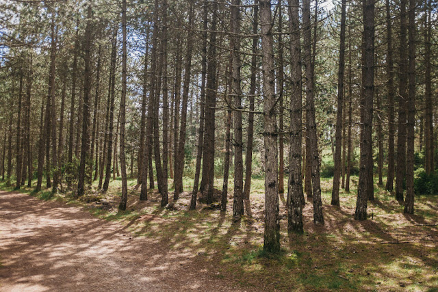 La forêt domaniale du Causse Noir pins