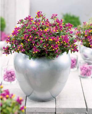 blog de jardinage pourquoi pas un jardin fleuri pendant l hiver. Black Bedroom Furniture Sets. Home Design Ideas